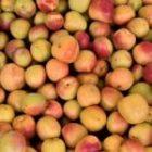 AgriData N°9 Zoom sur un fruit de saison : l'abricot